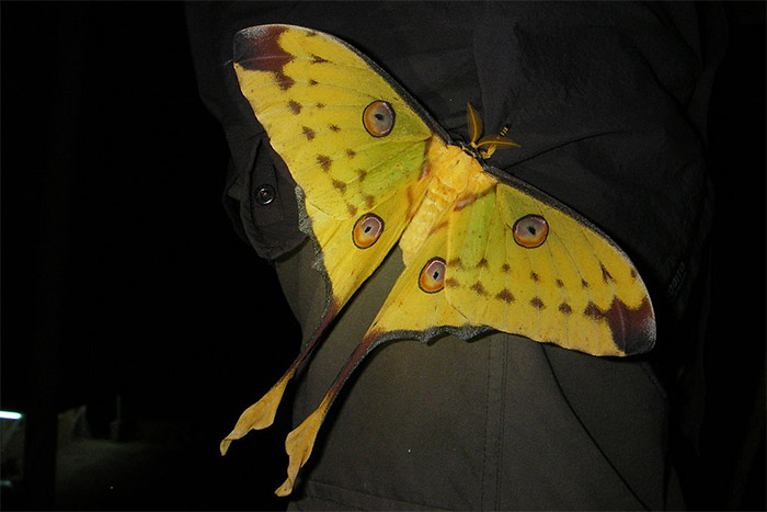 Le Papillon de Madagascar